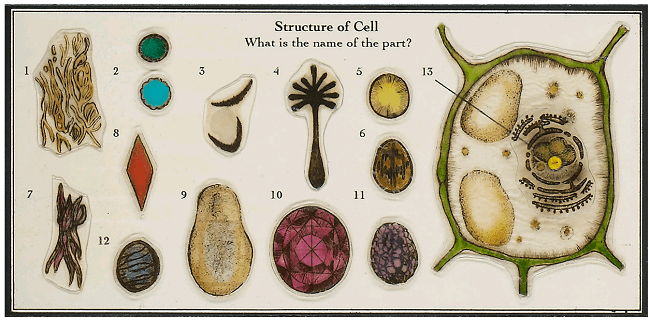 Structure of Cell, baba megumi